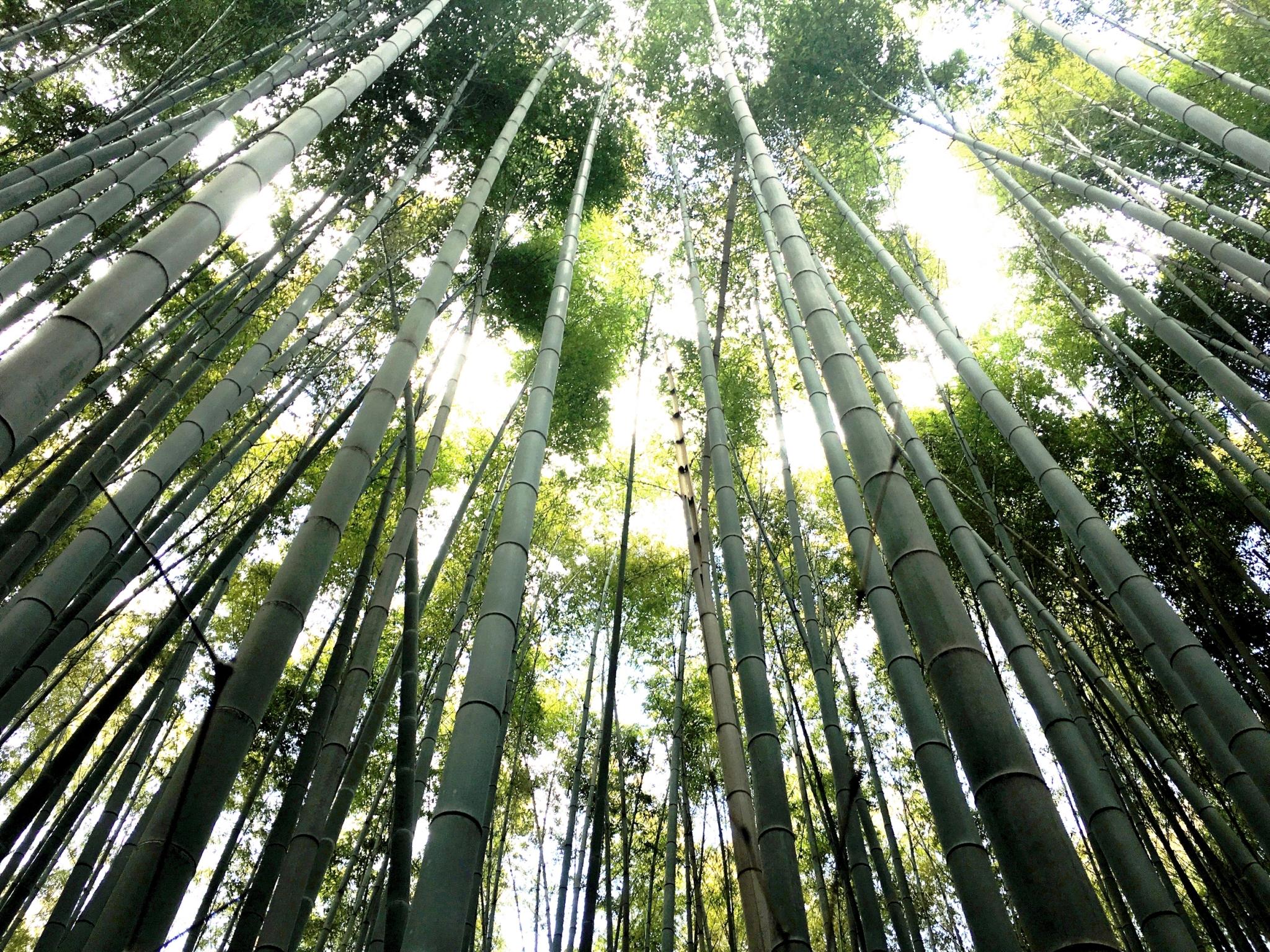 綠色生產,永續經營